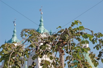 green leaves on green cupola