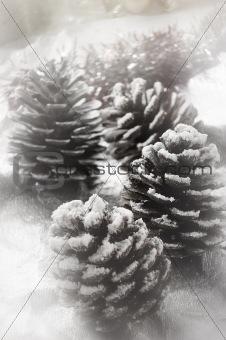 christmas fir cone