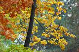 multicolored autumn