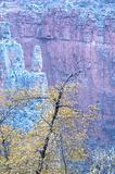 Grand Canyon fall foliage