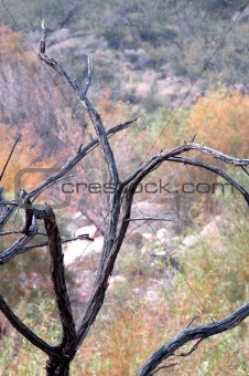 Flora of the Grand Canyon