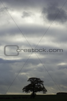 Tree against cloudy sky