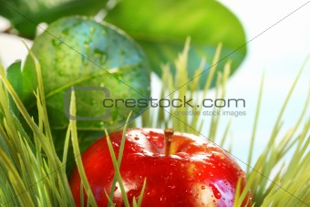 Apple in the grass