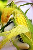Garden Corn