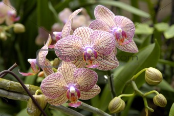 A cluster of orchids