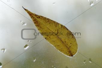 Autumnal leaf.