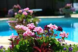 Poolside with  colored flowers