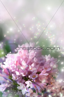 Fairy dust on lilac