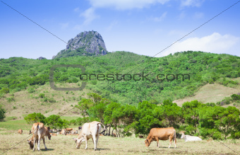 dajianshan mountain ranch. kenting national park in taiwan