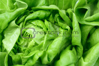 Fresh Green Salad Lettuce Leaves
