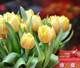 Yellow tulips (in soft focus)