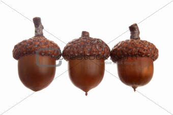 Three different acorns