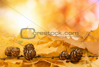 pine cones background with boked