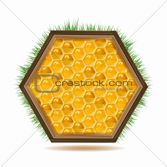 Frame with honeycombs