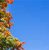 colorful autumn leaves on tree against blue sky