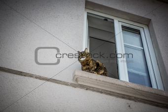 Cat at the window.