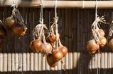 Hanging onions in autumn