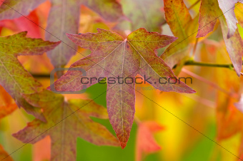 autumnal leaves and foliage