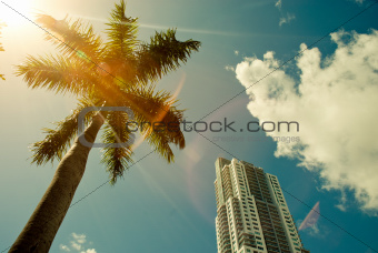 Green palm tree on blue sky background and modern building