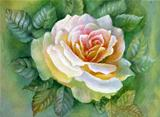 WATERCOLOR FLOWER-ROSE
