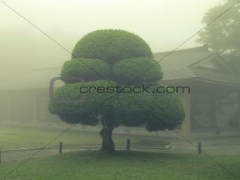 Japanese park tree