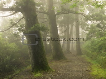 misty forest way in Japan