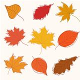 Set of autumn doodle leaves