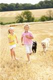 Children With Dogs Running Through Summer Harvested Field