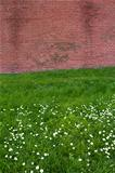 Brick wall on flower field