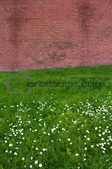 Brick wall on flower field