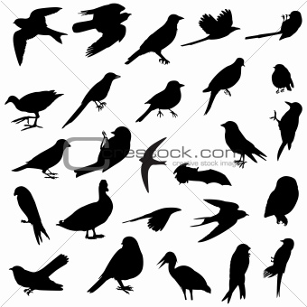 Birds silhouettes