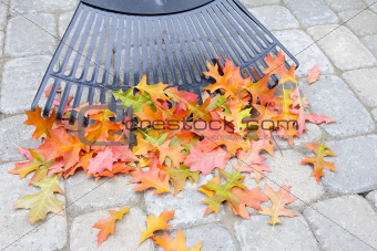 Raking Fallen Oak Leaves