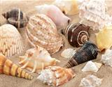 Seashells