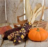 Indian Corn And Pumpkin