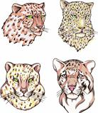 heads of leopard and cheetah