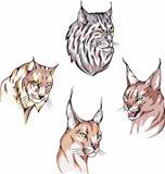 heads of lynx