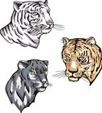 totems - panther and tigers with solar signs