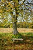 Autumn landscape with bench