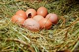 Hens&#39; eggs