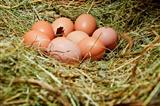 Hens' eggs
