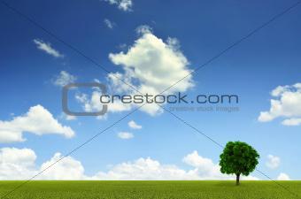 Green Grassy field landscape background