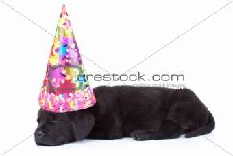 party dog sleeping