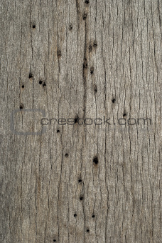 Wooden board woodworm holes