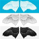 Wing. Vector illustration