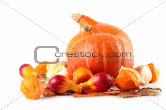 Autumn arrangement with Red Kuri Squash