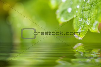 Leaf with a drop of water
