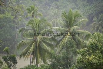 Torrential Rain Loboc River Bohol Philippines