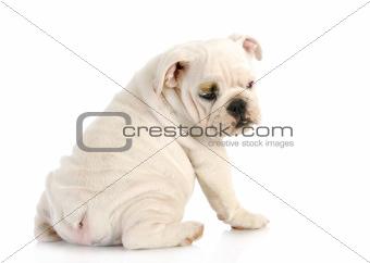 puppy looking over shoulder