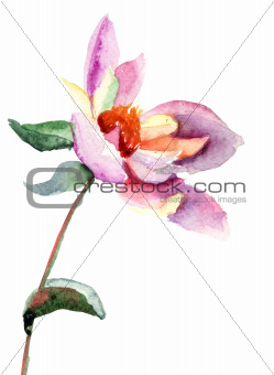 Dahlia flower, watercolor illustration
