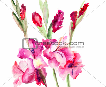 Beautiful Gladiole  flowers